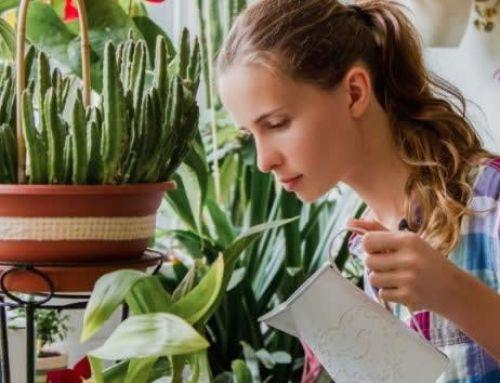City News Albania (cna.al) – Lulet që mbani në shtëpi nuk e pastrojnë ajrin